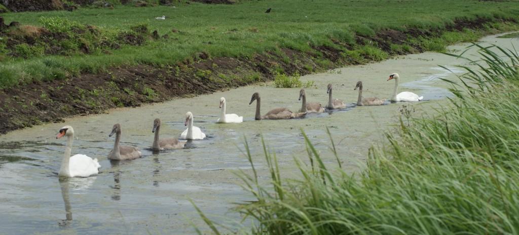 Familie Zwaan doet een rondje Oudewater