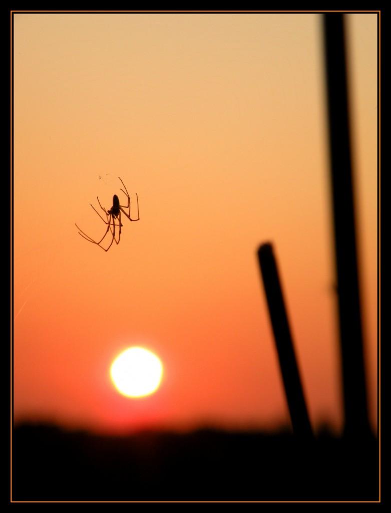 Spin wachtend op zijn avondeten